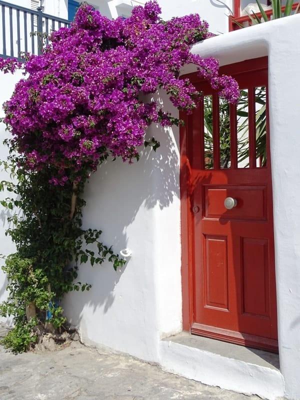 boucamvilles in Mykonos