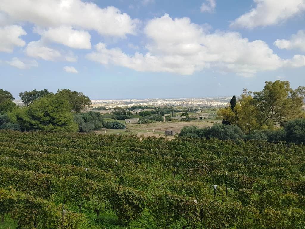 Mar Casar La Maison Du Vin Naturel Winery